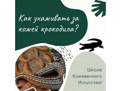 Как ухаживать за кожей крокодила